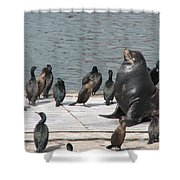 Sunning Shower Curtain