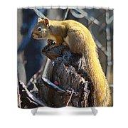 Sunning Squirrel Shower Curtain
