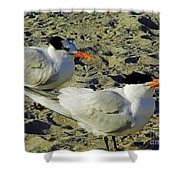 Sunning Terns Shower Curtain