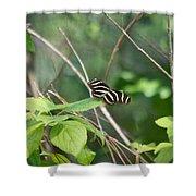 Sunning Zebra Longwing Butterfly Shower Curtain