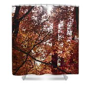 Sunny Autumn Day Poster Shower Curtain