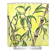 Sunny Bamboo Shower Curtain