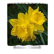 Sunny Daffodils Shower Curtain
