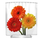 Sunny Gerbera On White Shower Curtain