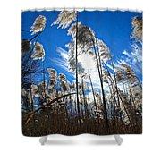 Sunny Marsh Beauty Shower Curtain
