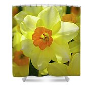 Sunny Narcissus Shower Curtain