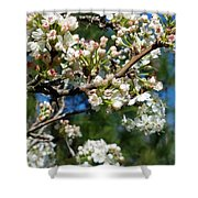 Sunny Pear Blossoms Shower Curtain