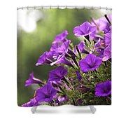 Sunny Petunias 2 Shower Curtain