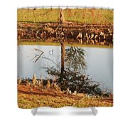 Sunny Pond Shower Curtain