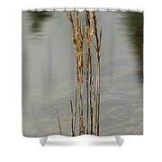 Sunny Reeds Reflect Shower Curtain