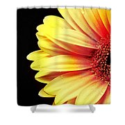 Sunny Side Over Easy Shower Curtain