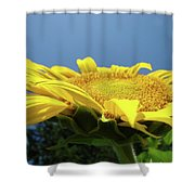 Sunny Summer Sunflowers Floral Art Baslee Troutman Shower Curtain