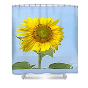 Sunny Sunflower Shower Curtain