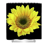 Sunny Sunflower Black Yellow Shower Curtain