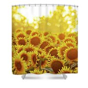 Sunny Sunflower Sunset Shower Curtain