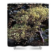 Sunny Tree Shower Curtain