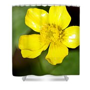 Sunny Yellow Cinquefoil Shower Curtain
