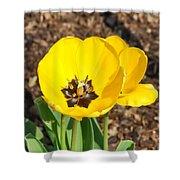 Sunny Yellow Tulips Shower Curtain