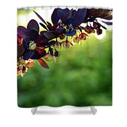 Sunrays With Blooms Shower Curtain