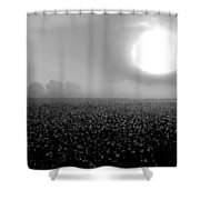 Sunrise And The Cotton Field Bw Shower Curtain by Michael Thomas