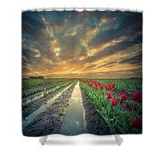 Sunrise At Tulip Filed After A Storm Shower Curtain
