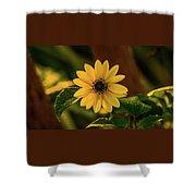 Sunrise Daisy Delray Beach Florida Shower Curtain