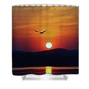 Sunrise Gull Shower Curtain