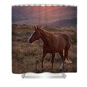 Sunrise Horse Shower Curtain