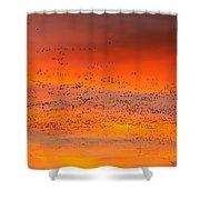 Sunrise Migration Shower Curtain