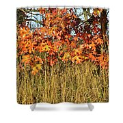 Sunrise On Oaks In Glacial Park Shower Curtain