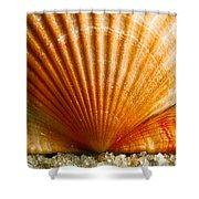 Sunrise On Shell Shower Curtain