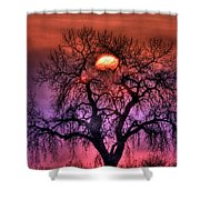 Sunrise Through The Foggy Tree Shower Curtain by Scott Mahon