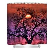 Sunrise Through The Foggy Tree Shower Curtain