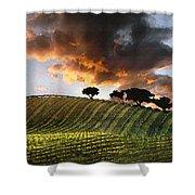 Sunrise Vineyard Shower Curtain