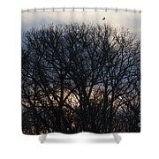 Sunrise With Bird Shower Curtain