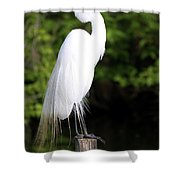 Sunrise With The Egret  Shower Curtain