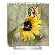 Last Sunflower Shower Curtain