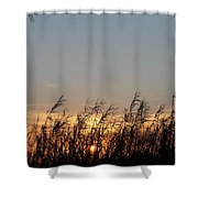 Sunset And Palm Grass Shower Curtain