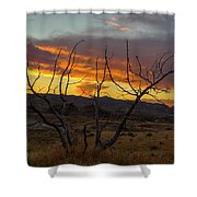 Sunset And Petrified Tree Shower Curtain