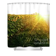 Sunset And Rows Of Sunflowers Shower Curtain