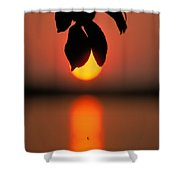 Sunset And Spider Shower Curtain