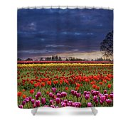 Sunset At Colorful Tulip Field Shower Curtain