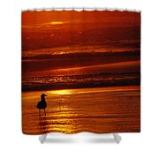 Sunset Bird 2 Shower Curtain
