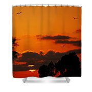 Sunset Birds Shower Curtain