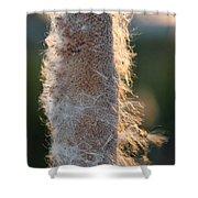 Sunset Cat Tail Lathrop California Shower Curtain
