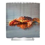 Sunset Crab Shower Curtain