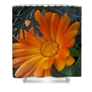 Sunset Daisy Shower Curtain