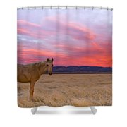 Sunset Filly Shower Curtain
