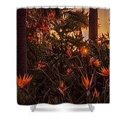 Sunset Garden Shower Curtain