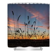 Sunset In The Weeds Shower Curtain